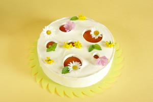 Meruňkový mousse cake