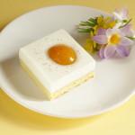 tvarohový koláč s meruňkami volské oko